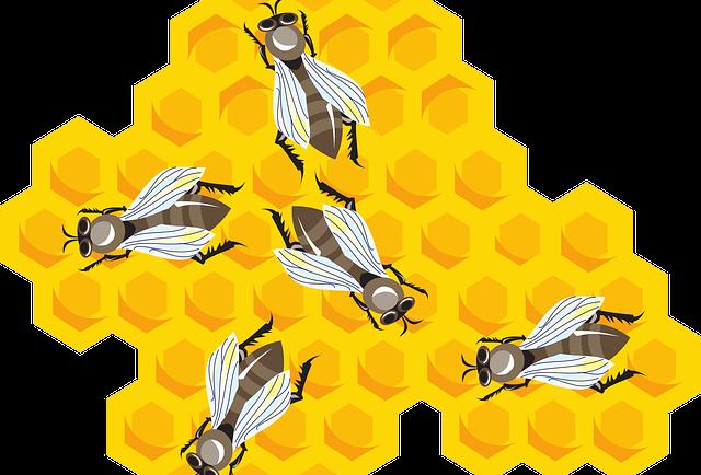 Miele e Apicoltura